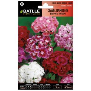 CLAVEL RAMILLETE DEL POETA Dianthus barbatus