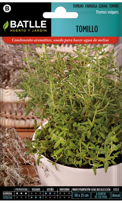 TOMILLO – FARIGOLA Thymus vulgaris