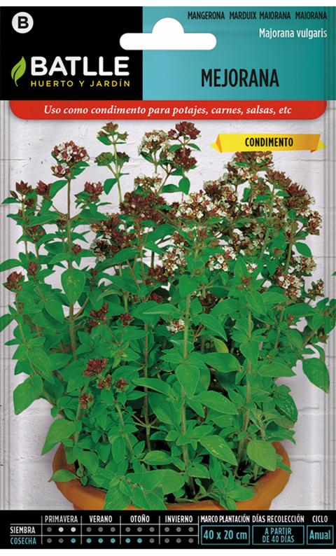 MEJORANA Majorana vulgaris