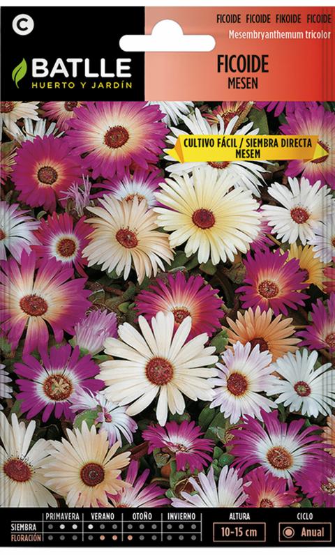FICOIDE TAPIZ MAGICO Mesembryanthemum tricolor