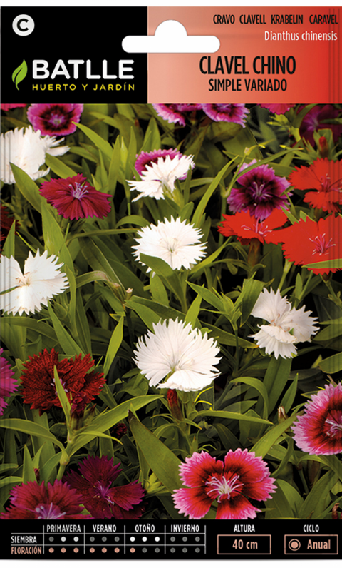 CLAVEL CHINA SIMPLE Dianthus chinsensis