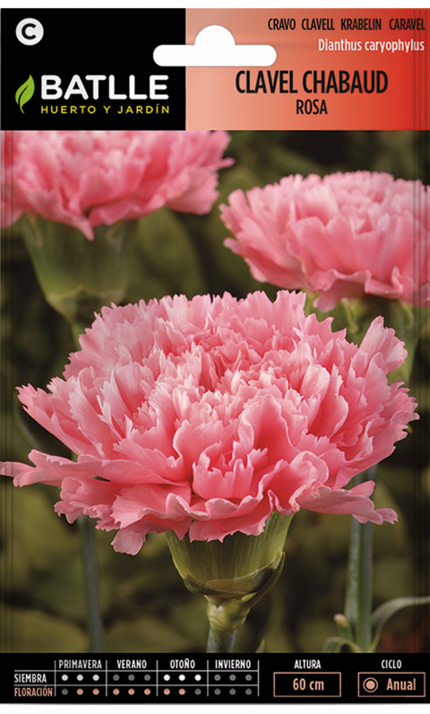 CLAVEL CHABAUD ROSA Dianthus caryophyllus