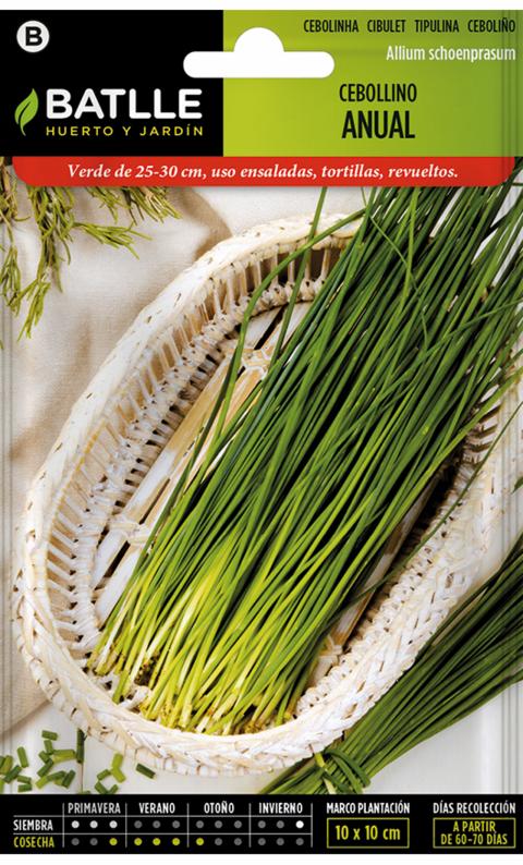 CEBOLLINO ANUAL Allium schoenoprasum
