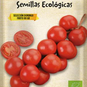 Semillas ecológicas de tomate de colgar Domingo