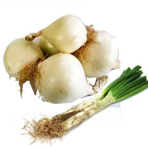Plantel cebollas para hacer calçots