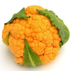 Plantel coliflor naranja abonoscalsilla