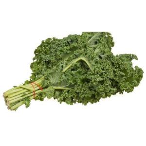 Plantel repollo kale