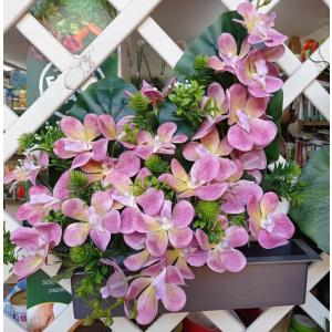 Jardinera Orquidea Cymbidium