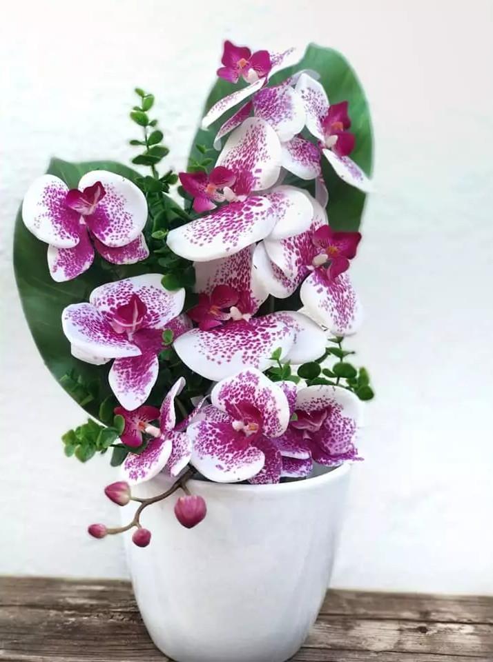 Ramo Orquidea moteada