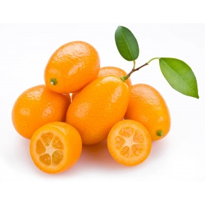árbol kumquat (fortunella)