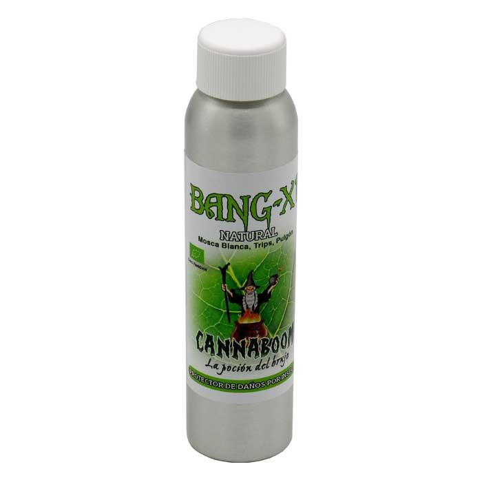 Bang X1
