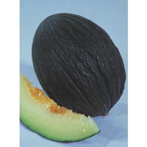 melon tendral