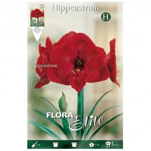 Bulbos Amarilis Hippeastrum Red Elite