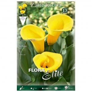 Bulbos Calla Yellow Elite Zantedeschia