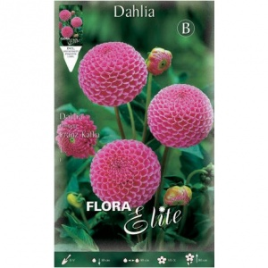 Bulbos de Gladiolo variados Large Flowered mixed