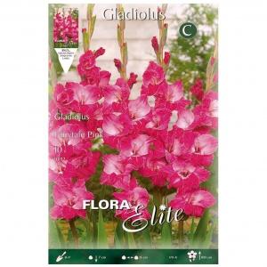 Bulbos Gladiolo Fairytale Pink Elite