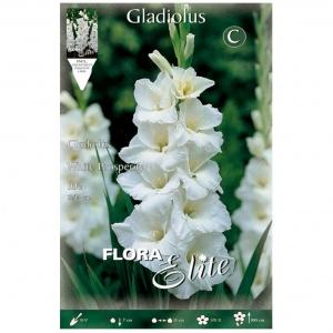 Bulbos Gladiolo White Prosperity Elite