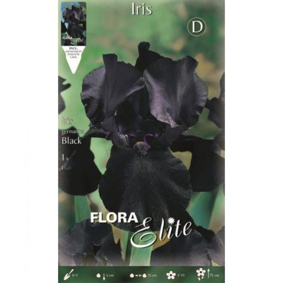 Bulbos Iris Gérmanica Black Elite