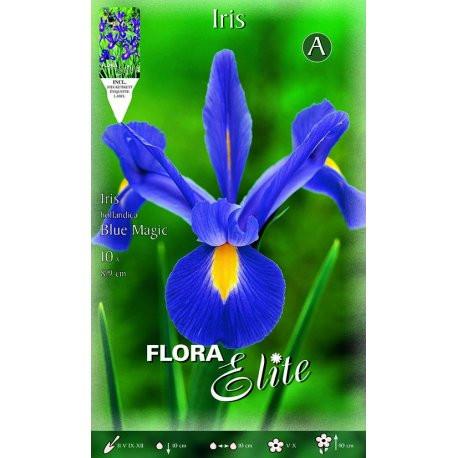 Bulbos Iris Gérmanica Blue Elite