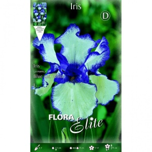 Bulbos de Iris germánica azul y blanca