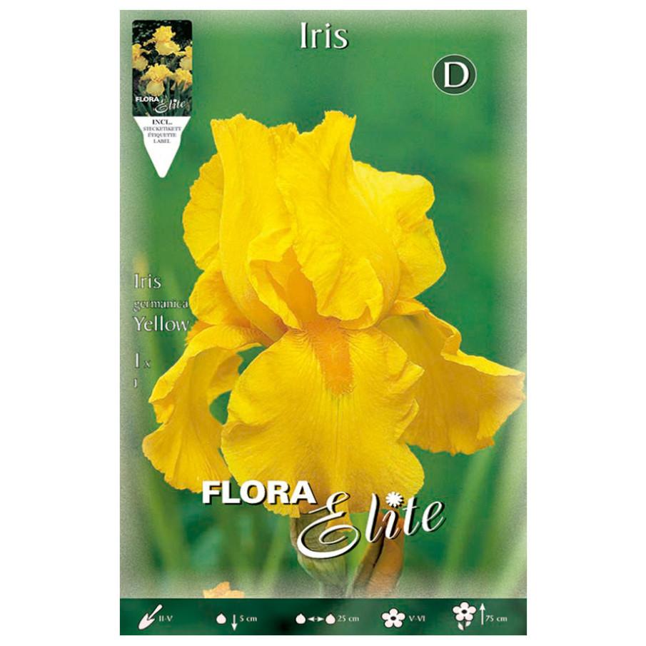Bulbos Iris Gérmanica Yellow Elite
