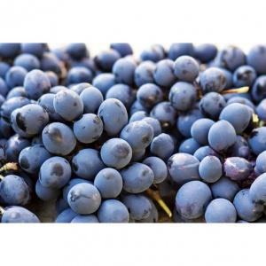 Parra de uva Autumn Royal