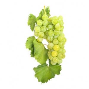 Parra de uva moscatel Alejandria