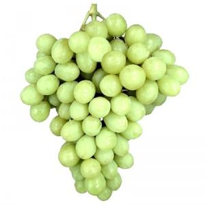 Parra de uva superior sin semillas