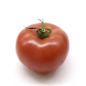 Plantel tomate Anairis injertado