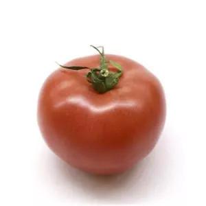 Plantel tomate híbrido varón