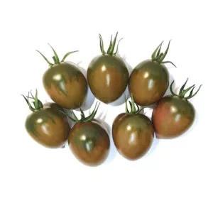 Plantel tomate injertado cherry pereta negro