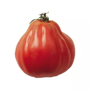 Plantel tomate injertado Corazon de Buey