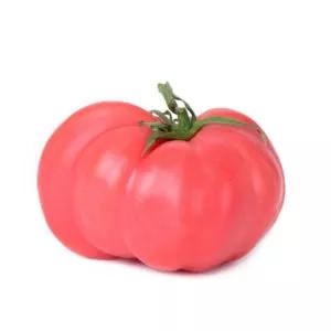 Plantel tomate injertado rosa